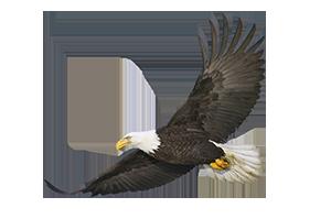 Eagle Eye Centre